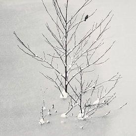 Lonely Bird von Lena Weisbek