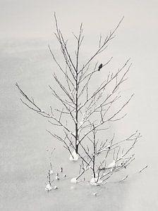 Eenzame vogel van Lena Weisbek