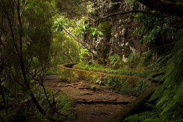 Levada wandelingen over het bloemeneiland Madeira