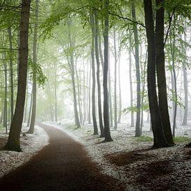Winter im Frühlingswald von Yvonne Albe