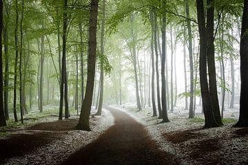 Winter im Frühlingswald