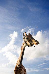 Giraffe vs hollandse lucht van