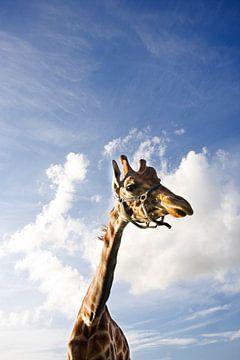 Giraffe vs hollandse lucht von Gwen Mustamu
