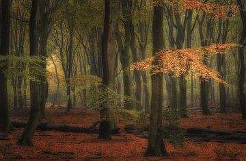 Goldene Blätter von Arjen Noord