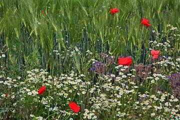 Wildblumen 3 von Edgar Schermaul