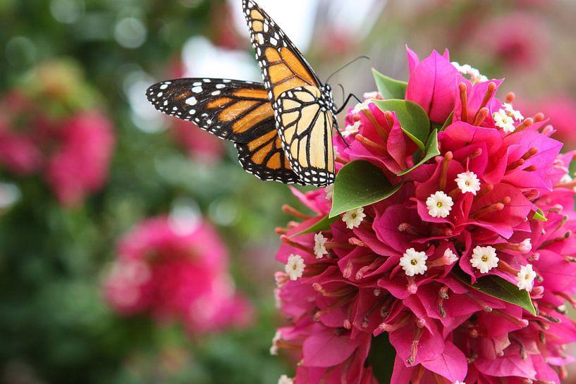 vlinder op bloem van Frans Versteden
