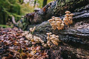 Wilde paddestoelen in de herfst