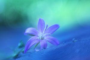 Dreamy purple
