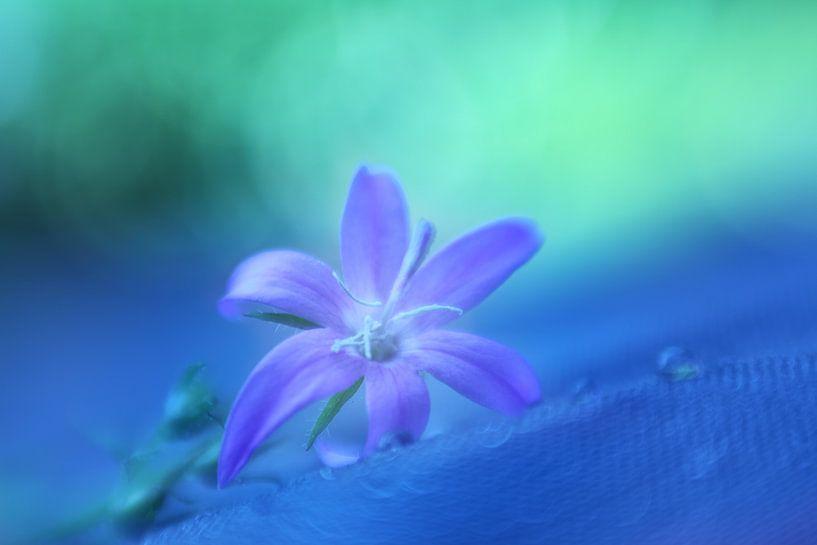 Dreamy purple van LHJB Photography