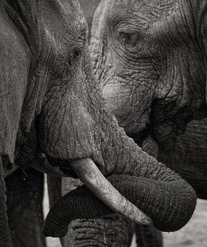 Elefanten von Ed Dorrestein