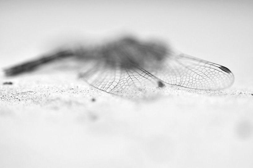 Libelle zwart-wit van Sascha van Dam
