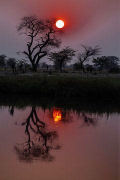 Zonsondergang over de Okavango sur Henri Kok