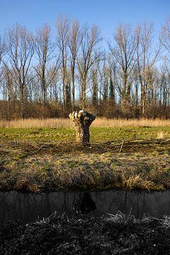 Kale eenzame knotwilg von Arno Photo