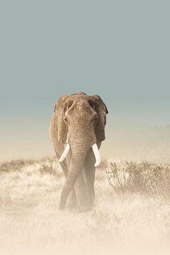 Der Weg des Elefanten von Melanie Delamare