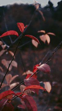 Herbstblätter von AciPhotography