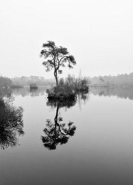 Reflexion im stillen Wasser von Alice's Pictures