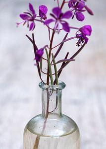 Stilleven met paars kruid