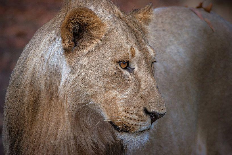 Mother Lion van Guus Quaedvlieg