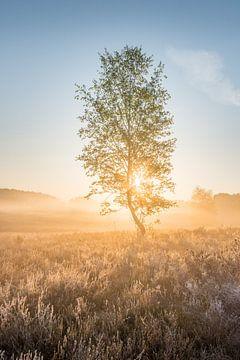 Birke bei Sonnenaufgang im Moor von John van de Gazelle