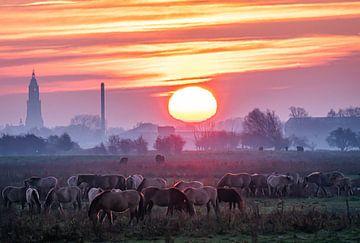Paarden in ochtendmist bij zonsopkomst van Mischa Corsius