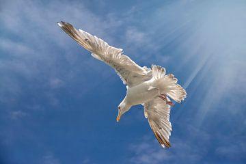 Meeuw, Seagull van Corinne Cornelissen-Megens