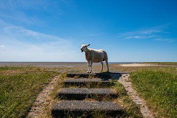 Schafe mit Aussicht von Merijn Loch