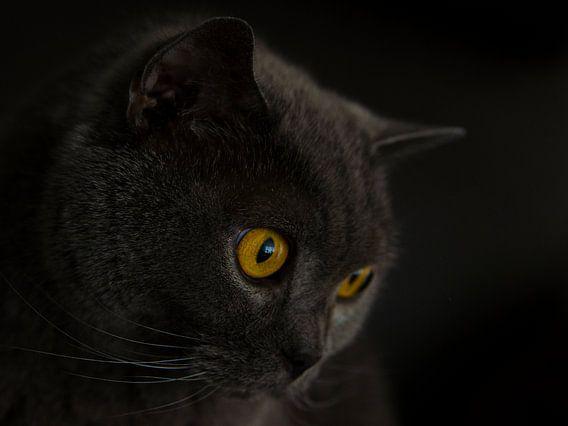 Cat eyes van Danny van de Graaf