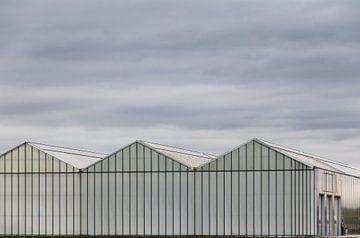 Gewächshäuser von Stefan Zwijsen