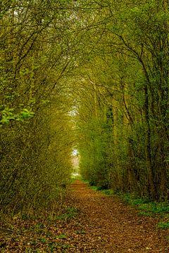 Lente bos van Irene Lommers