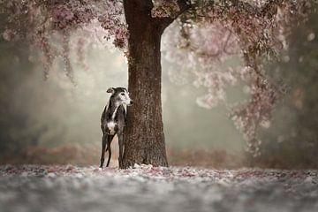 Onder de bloesem boom