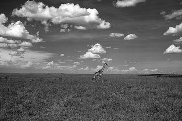 Giraffe in der Masai Mara von Angelika Stern