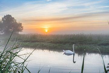 Zonsopkomst met Zwaan in de mist van Rossum-Fotografie