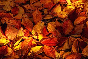 Herbstlaub van Claudia Moeckel