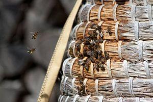 Wat een bijennest