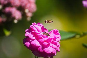 Biene in Warteschleife von Lukas Kalkhoff