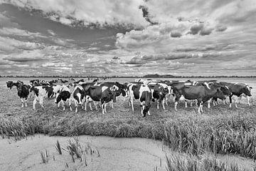 Kuhherde auf einer Wiese mit Teich von Tony Vingerhoets