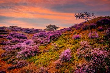 Heide heuvels van Peter Heins