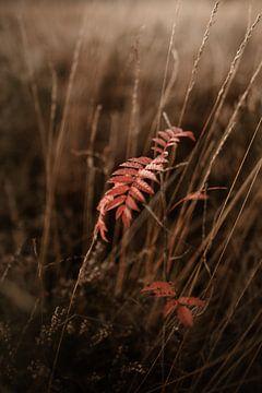 Herfst op de Veluwe van Nanda van der Eijk