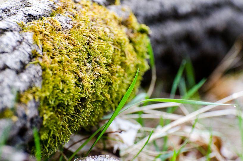 Druppel water op een groene grasspriet van Maurice Verschuur