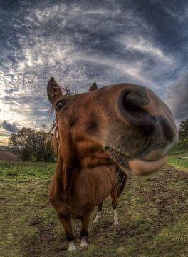 Horse van Carina Buchspies