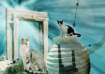 Griekse katten van Ans van der Heide