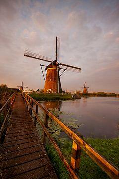 Mühlen in Kinderdijk im Abendlicht von Halma Fotografie