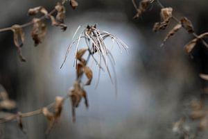 Capsules de graines d'épilobe (Epilobium) sur un fond de nature floue, concept de wabi sabi, symbole