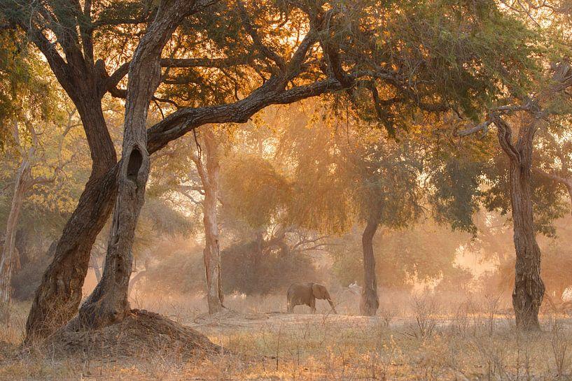 Olifant in sprookjesachtig bos van Anja Brouwer Fotografie