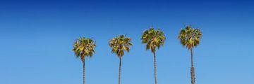 Palmenidylle | Panorama von Melanie Viola