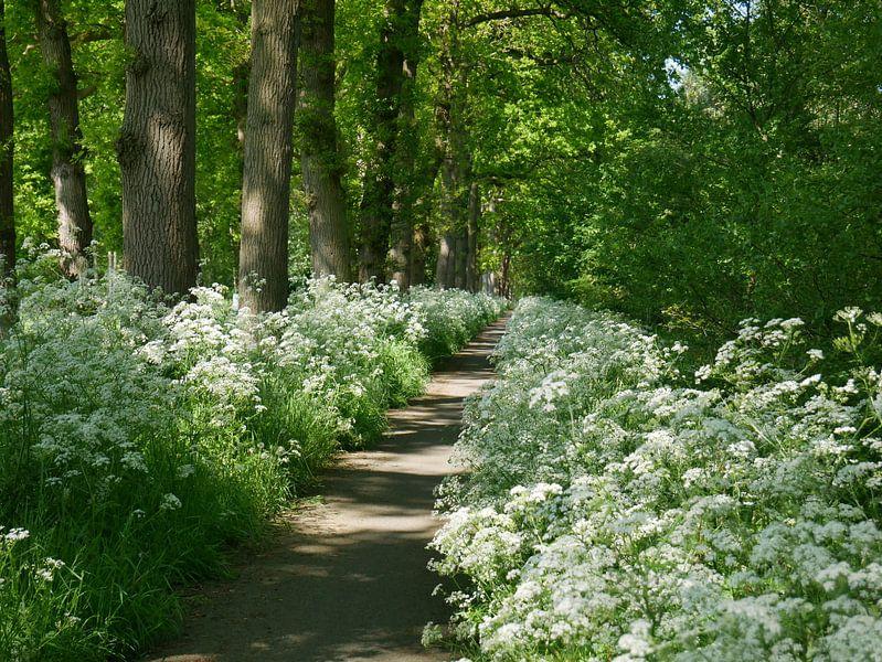 Radweg durch die Natur. von Wim vd Neut