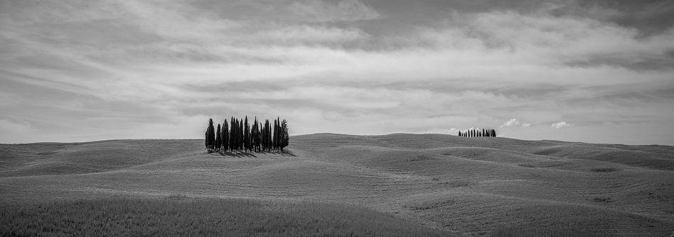 Monochrome Tuscany in 6x17 format, Cipressi di San Quirico d'Orcia II van Teun Ruijters