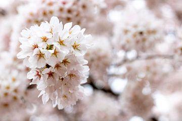 Blüte im Amsterdamer Wald von Joy van der Valk