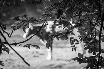 Vind de koe... van Pascal Raymond Dorland