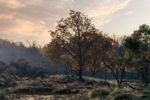 Landschap natuur in Nederland